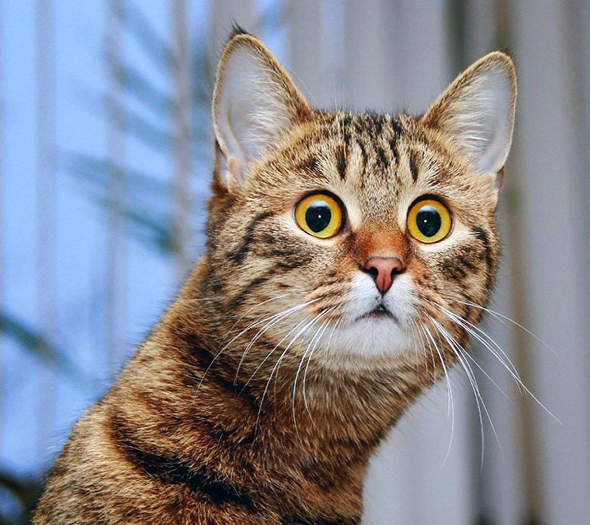 Демотиваторы с удивленными котами