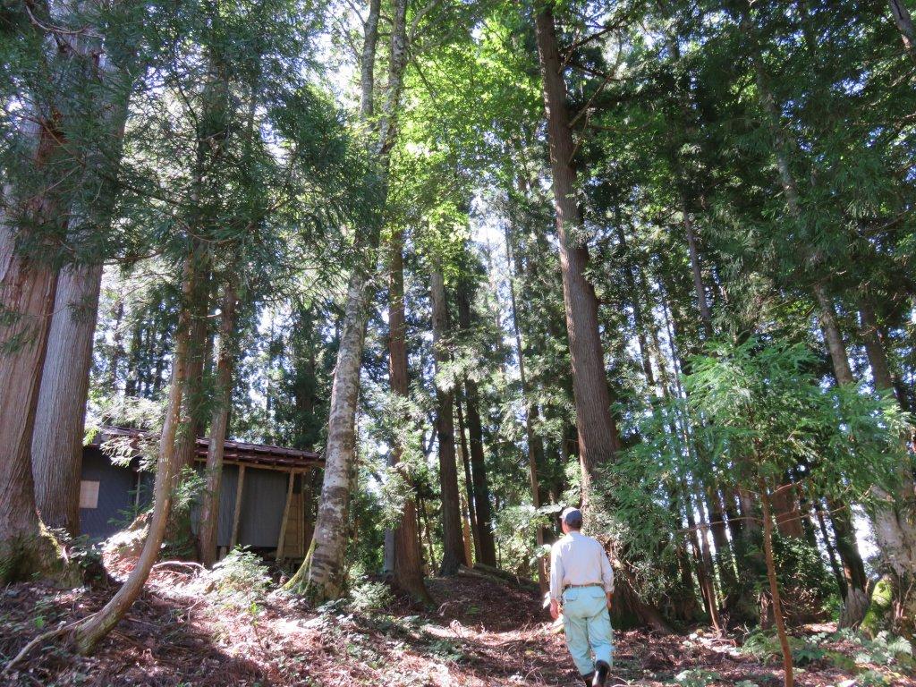 大多和集落のシンボルとも言える白山神社。巨木に囲まれたその姿は、集落内の何処からでも目につく。集落の規模とは対照的に立派な本社と鳥居が立つ。鳥居には有峰ダム建設関係の名も見える。それにしても、境内は綺麗に整えられている。住む人はいなくとも、今でも元住人の心の拠り所なのだ。