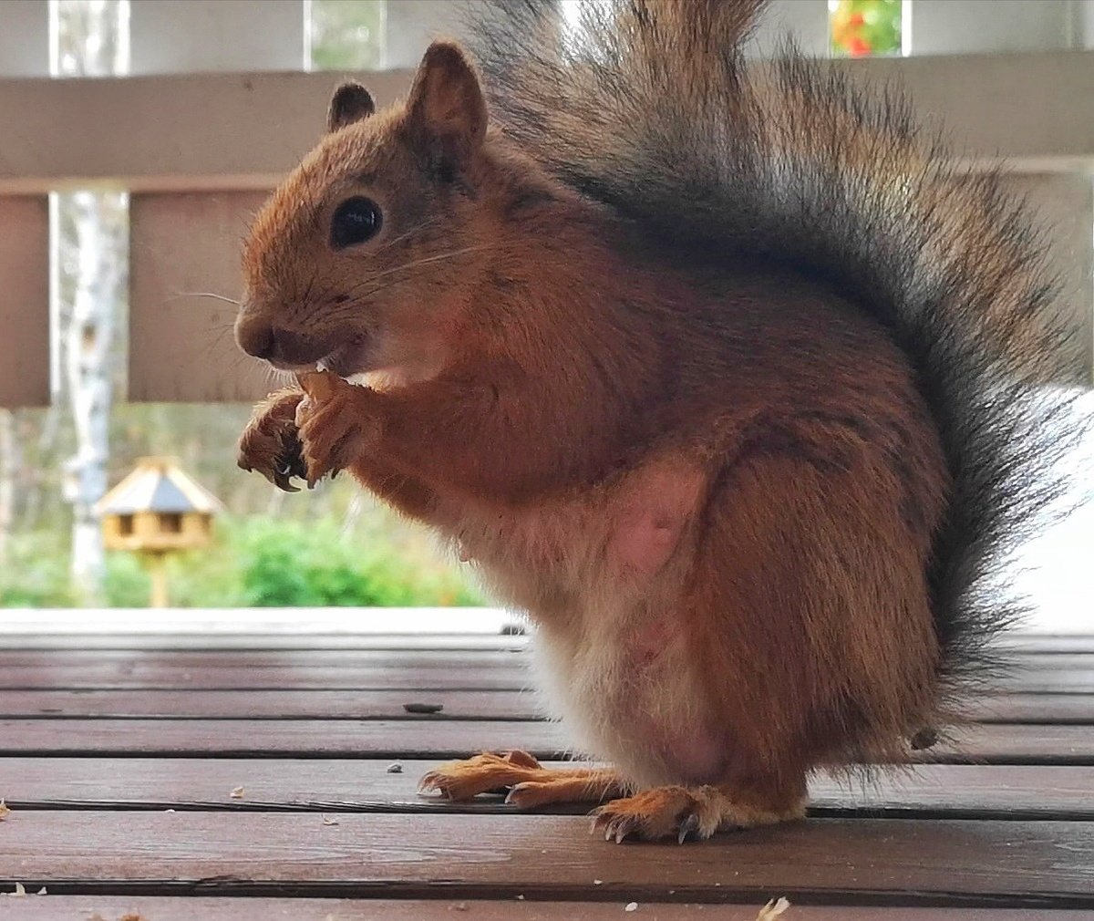 Image result for squirrels forbes