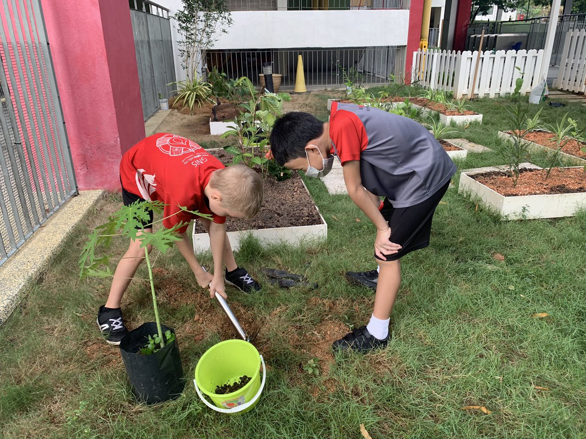 Our @IGBintschool action heroes taking direct action to plant trees in the garden with the #freetreesociety https://t.co/OqcuTBfO2W