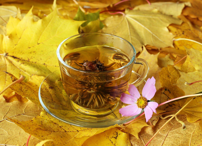 осенние листья картинки с добрым утром ладят друг