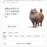 Googleの知られざる機能!動物名を検索すると3Dで表示できる!