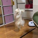 テレポートで帰宅した瞬間の猫がフィギュアになった!