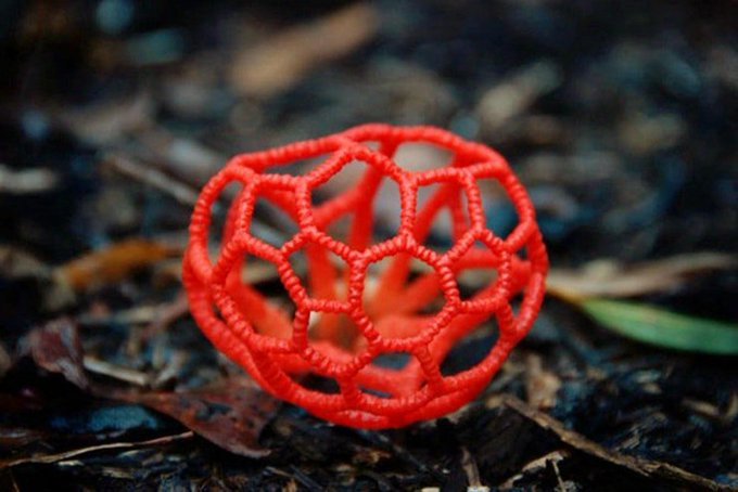 Clathrus ruber is a mushroom also known as red cage due to the striking fruit bodies that are shaped somewhat like a round or oval hollow sphere with interlaced or latticed branches buff.ly/2He1G6T