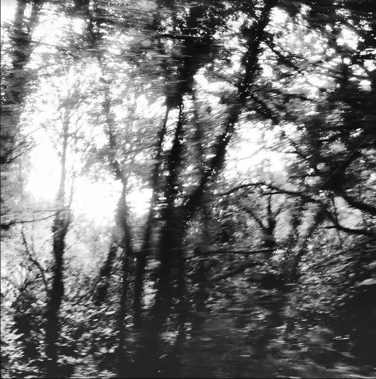 Suddenly the wood was recast. Trees he had known so intimately by shape altered their stances, forget their previous arrangement of branches. He found himself helpless to think anything other than 'these are not my trees. – #CLNolan, The Other Path, 1913