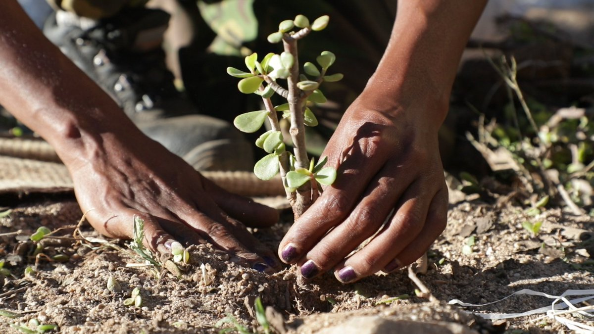Just launched the Trillion Tree Campaign - Planting Trees has never been easier! We need all measures for mitigation and adaptation. Trees have many benefits beyond carbon - we need to plant the right tree, at the right time #GLFNYC2019 #ThinkLandscape unenvironment.org/news-and-stori…