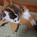 それもう箱じゃないけどいいの!?猫の安心するポイントが分からない!
