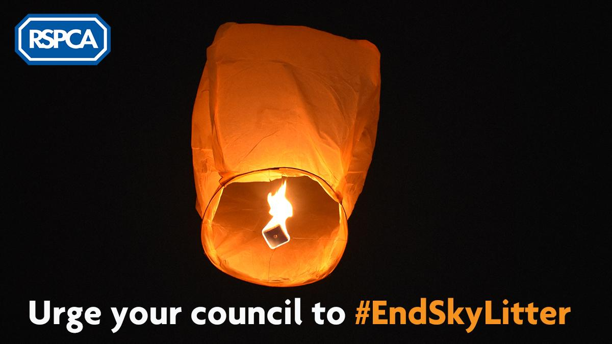 With bonfire night fast approaching, we urge you to be mindful of the dangers that sky lanterns pose to animals, who can become entangled and injured. Call on your local English council to #EndSkyLitter by banning the release of balloons and sky lanterns: bit.ly/2GkfpqX