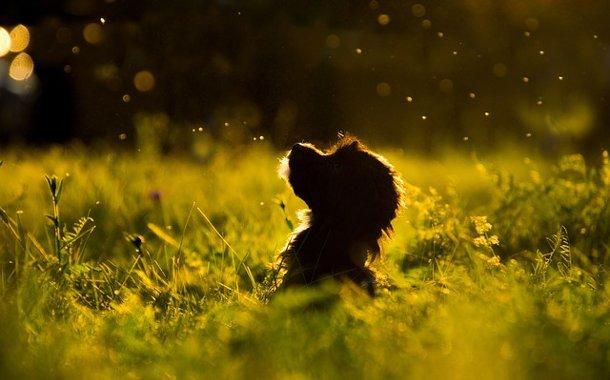 Unsere Seelenhunde wünschen sich so sehr, uns wieder glücklich zusehen… https://www.merlins-tagebuch.com/2019/09/29/unsere-seelenhunde-wuenschen-sich-so-sehr-uns-wieder-gluecklich-zu-sehen/…pic.twitter.com/IrKUg3Vz4b