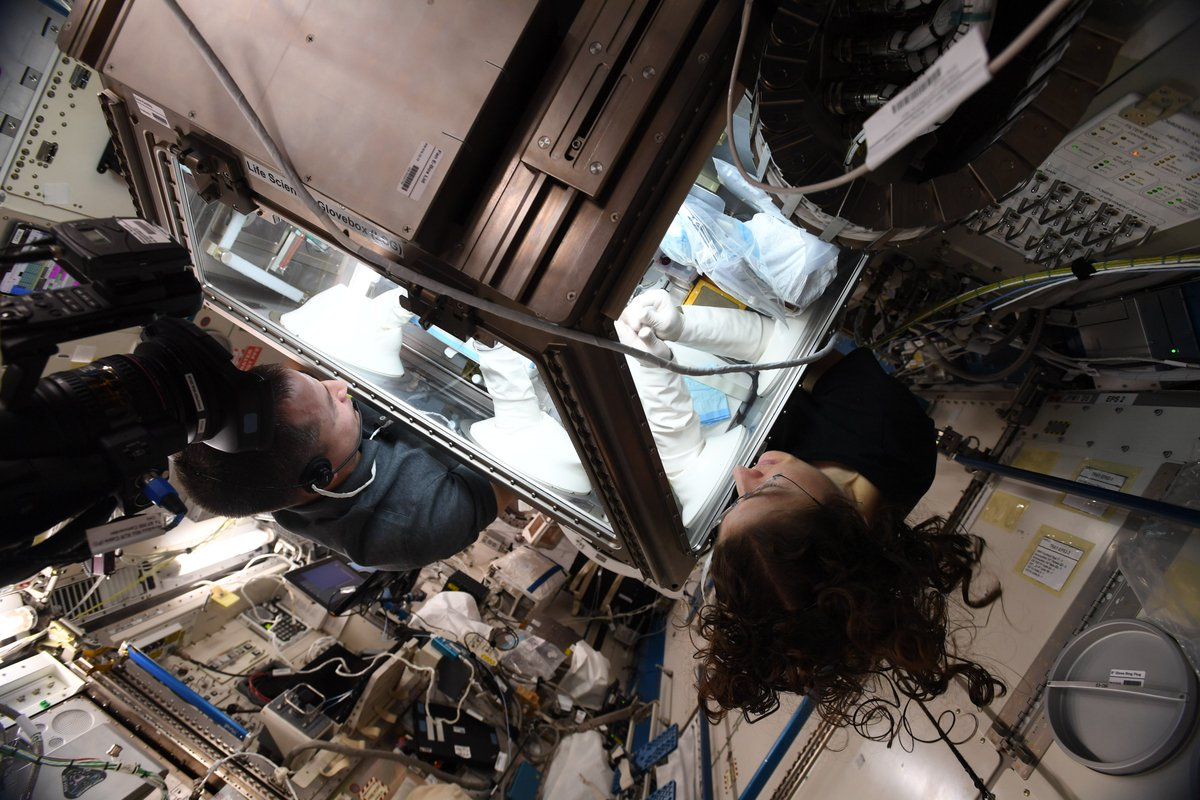 Research room for two! The new Life Sciences Glovebox has opened even more opportunities for @ISS_Research aboard the @Space_Station since it was installed. Most recently, weve used it to study physiological changes brought on by life in microgravity. go.nasa.gov/2n7mVio