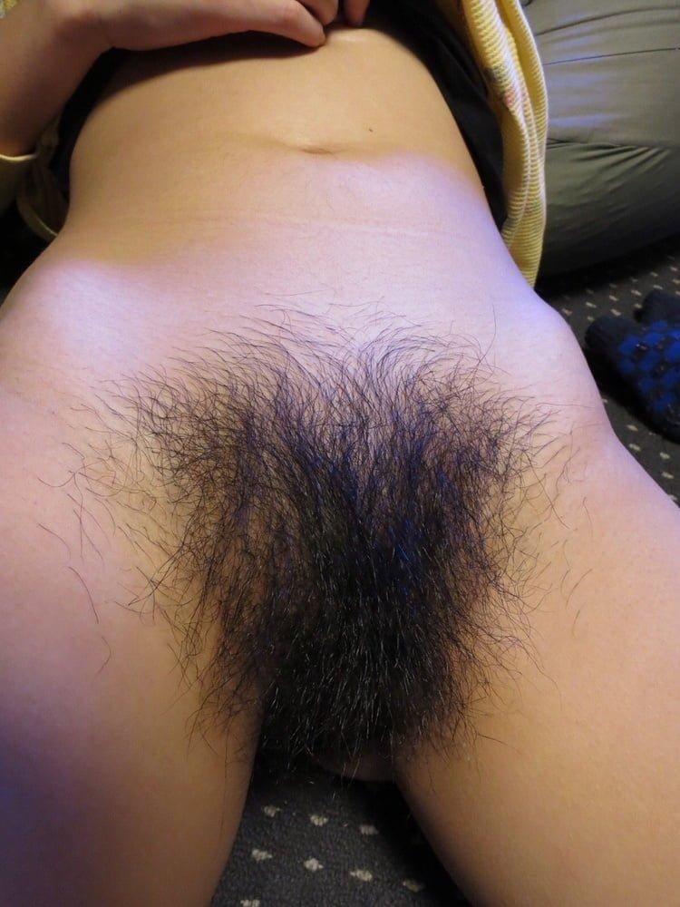 Asian bush hairy
