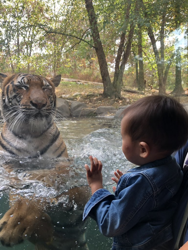 This encounter with the tiger alone made the trip to @BronxZoo totally worth it!