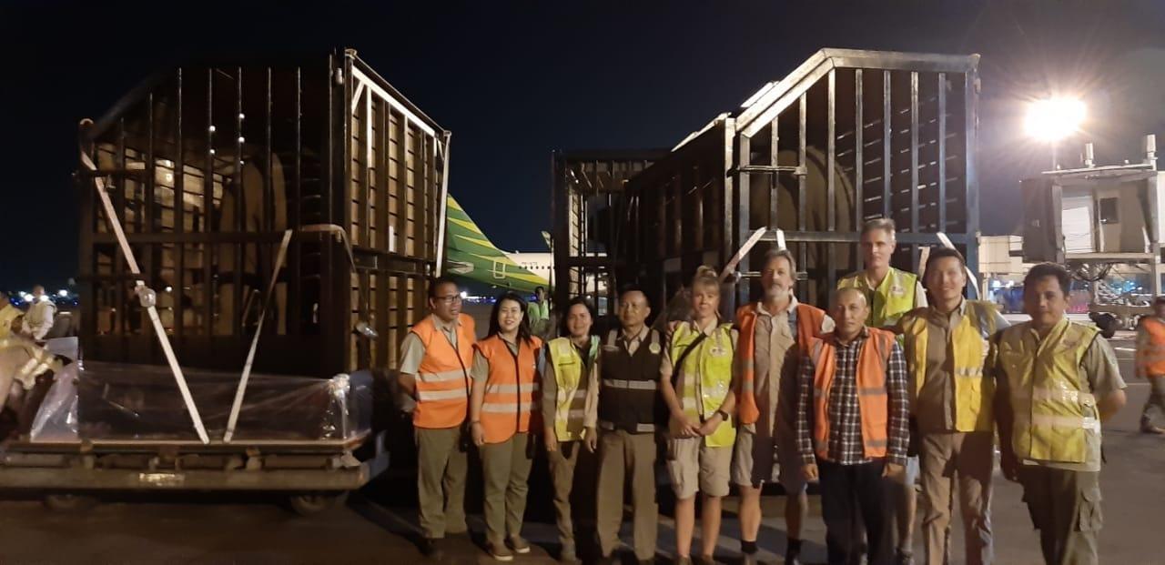 (Bahasa Indonesia) Gajah Sumatera Asal Indonesia Dipinjam Australia