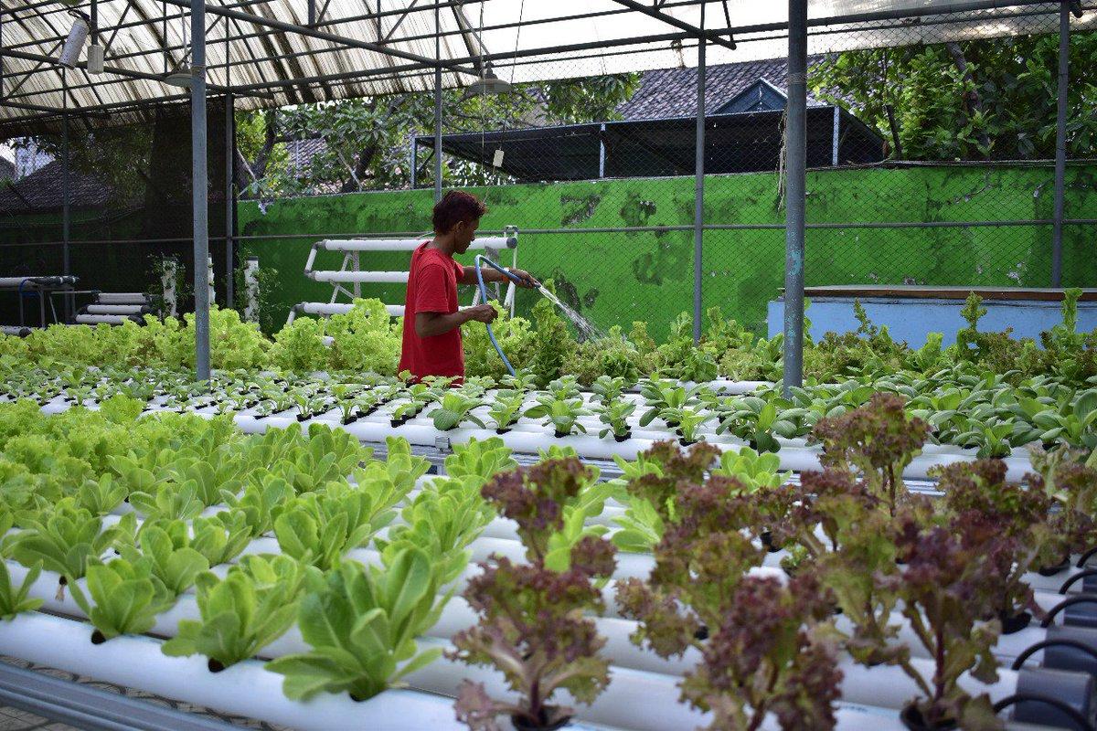 Sapawarga Kota Sby On Twitter Mini Agrowisata Di Jl