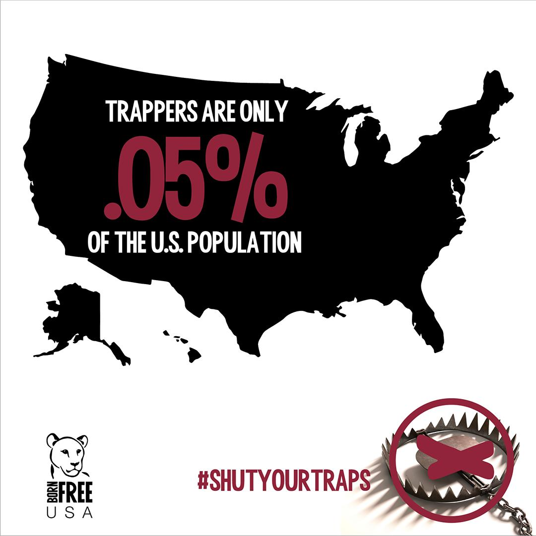 #Trappers would have you believe that #trapping is common & that it is completely normal to allow an #animal to suffer for hours on end before killing the animal for its #fur. The truth is only one in every 2,000 people in the United States is a trapper. bornfreeusa.org/trapping