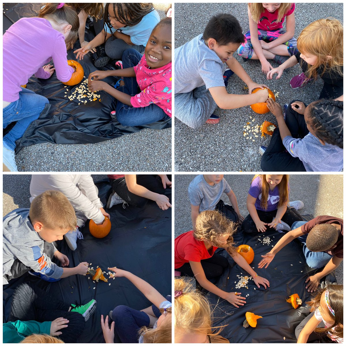 Pumpkins pumpkins pumpkins! My favorite week so far in science. We started off by carving our pumpkins and getting all the seeds out. Tomorrow we will be counting the seeds. #sciencerocks #sharks4life @LBSharks<br>http://pic.twitter.com/7IJT8RapUa