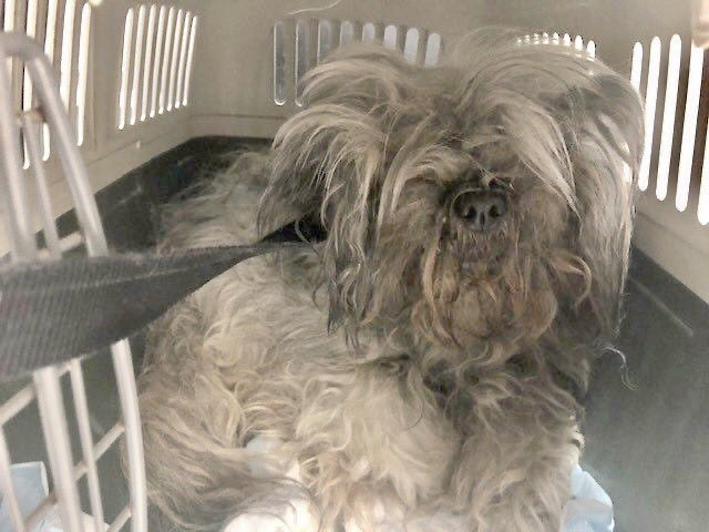 For 14 years, her humans left Star untrained, ungroomed, unattended - and when she finally acted out, they dumped her to die Thursday in a horrific kill shelter. Mistreated, terrified Star #78489 needs pledges for Rescue via @TomJumboGrumbo. PLEASE RT STAR  https:// newhope.shelterbuddy.com/Animal/Profile /Index/b9ce49e8-8f43-4ca1-b858-c06bcef8661f   … <br>http://pic.twitter.com/fFPSd8fhcZ