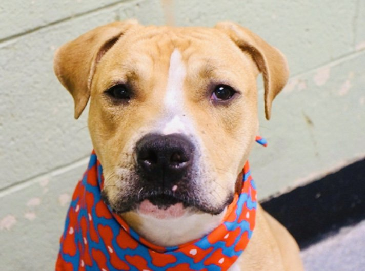 Don Julio dies @nycacc Thursday - surprisingly enough he's SCARED. That he calms from barking to shy doesn't matter. This is a kill shelter and he had his 10 days to find a human. Don Julio #77683 needs pledges for Rescue/F/A via @TomJumboGrumbo PLEASE RT! newhope.shelterbuddy.com/Animal/Profile…