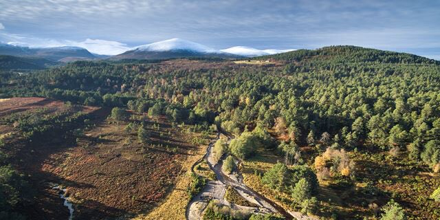 It is time to Rewild Scotland for nature, climate, mental health and employment. scotlandbigpicture.com/what-is-rewild…