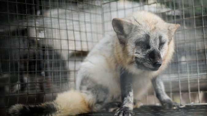 Bluewater: Ban all fur products from your premises indefinitely! Plz sign:  http://www. change.org/en-GB/petition s/bluewater-bluewater-ban-all-fur-products-from-your-premises-indefinitely   … <br>http://pic.twitter.com/fZAoMz8bMy