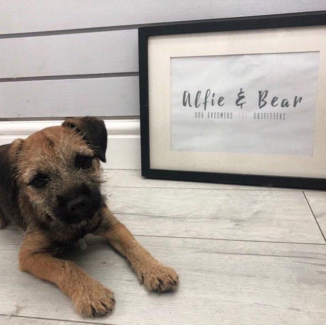 Meet Baby Bramble Everyone  In For Her First Puppy Pamper   #DogGroomer #DogGrooming #BorderTerrier #Dogs #DogSpa #DogGroomingSalon #DogOfTheDay #DogsOfTwitter #DogLovers #NEFollowers #NewcastleUponTyne<br>http://pic.twitter.com/TtyuefytHb