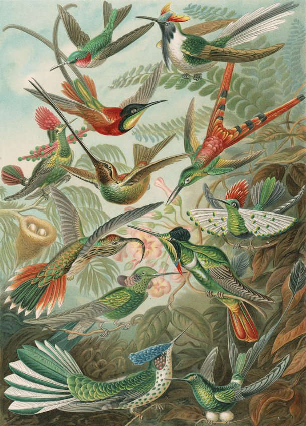 An 1899 illustration of hummingbirds (Trochilidae), among the smallest birds in the world. The image features twelve figures of hummingbirds within a landscape of plants and with details of nests and egg clutches. <br>http://pic.twitter.com/dJEKxidAzg