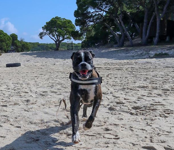 Here's Buster Enjoying His Walk On The Beach   #dogs #doglover #dogwalker<br>http://pic.twitter.com/tEcbH2gy0L