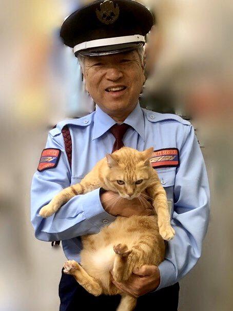『再会😺meet again』(2019/10/13) 🎨昨日、ゴッちゃんが遊びに来てくれましたニャ。警備員さんも嬉しそう!#尾道 #千光寺公園 #尾道市立美術館 #茶トラ #cat
