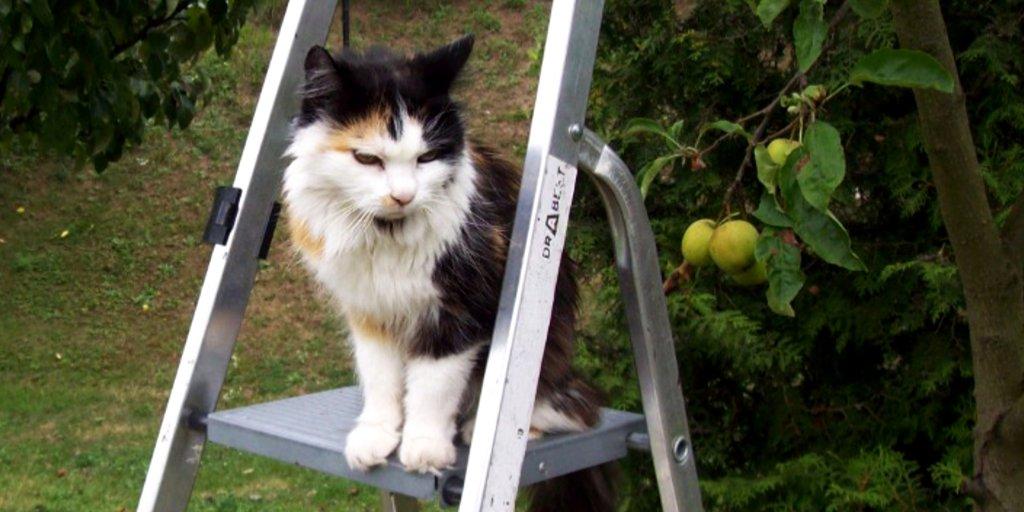 Lesbean kočička