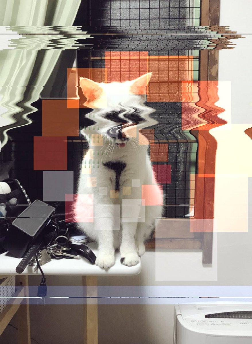 😶🆒 cat glitch nodejs scatter color cosine generative codeart rosace Origin img by @muddycat_atami