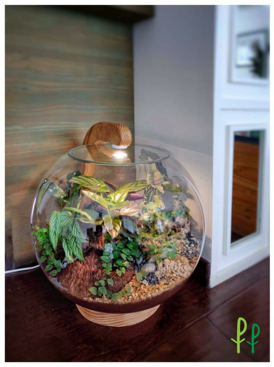Plant People On Twitter Getting Your Home Diwaliready Or Looking For Unique Gifts For Your Loved Ones Check Out The Baap Of All Terrariums The Terrariumlamp From Plantpeople A Gorgeous Self Sustaining
