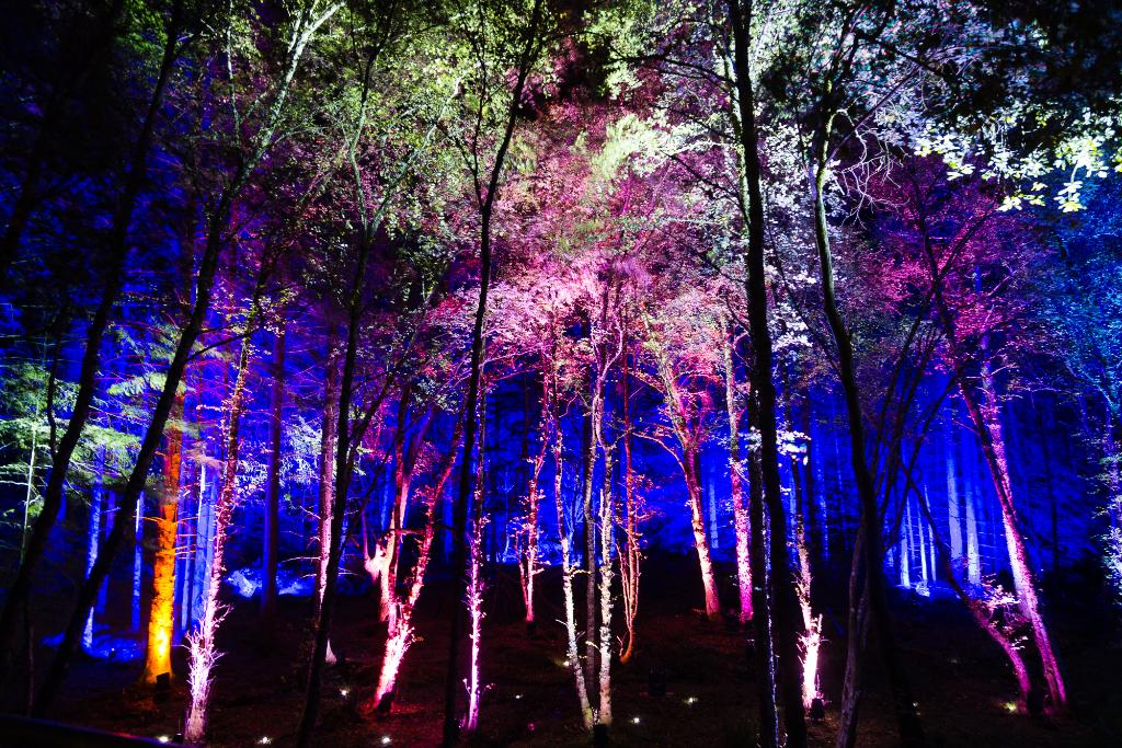 test Twitter Media - ⚠ ✨ @enchantforest is on 'til Sun 3rd Nov!   The #A9 around #Pitlochry may be busier than usual so check your journey before you travel: https://t.co/Eig0H0KB8X   #RunForestRun @PerthandKinross @PerthKinPolice @NWTrunkRoads https://t.co/cffhn4e7iX