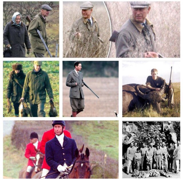 @Labour4Animals @CBTHunting @PeterEgan6 @KP24 @NevilleSouthall @Jan_Leeming @lesley_nicol @Animal_Watch @The_Animal_Team @_AnimalAdvocate @BoboGervais I bet you 'conventional hunting' has an elastic definition in the Windsor household. #QueensSpeech