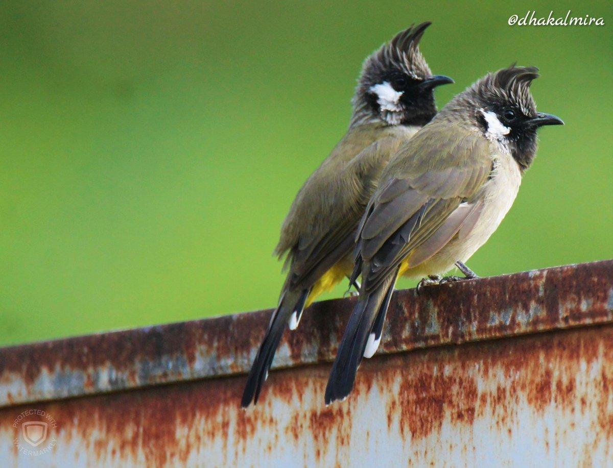#NatureWalk #DiaryOfATraveller #Birding #BirdWatching #TheJoyOfSmallThings #naturephotography #BirdPhotography