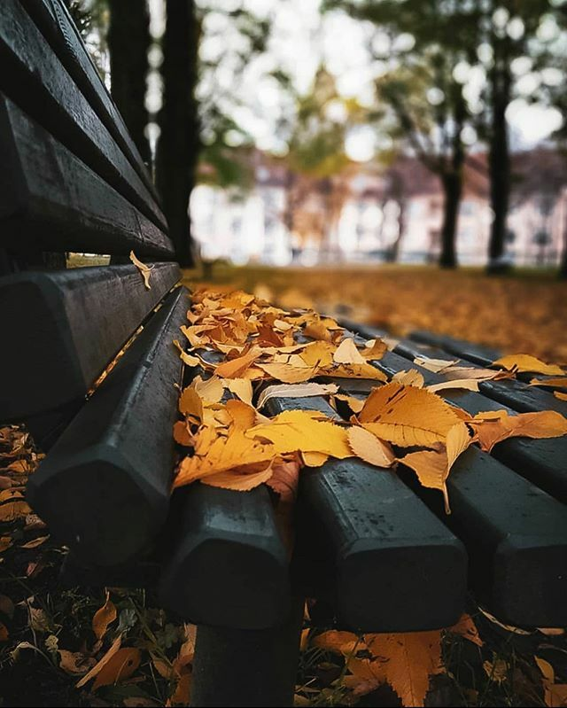 Autumn leaves on park bench 🍂😊🍂🍁 #oslo #visitoslo Photo: @elmaos ift.tt/32gP99I