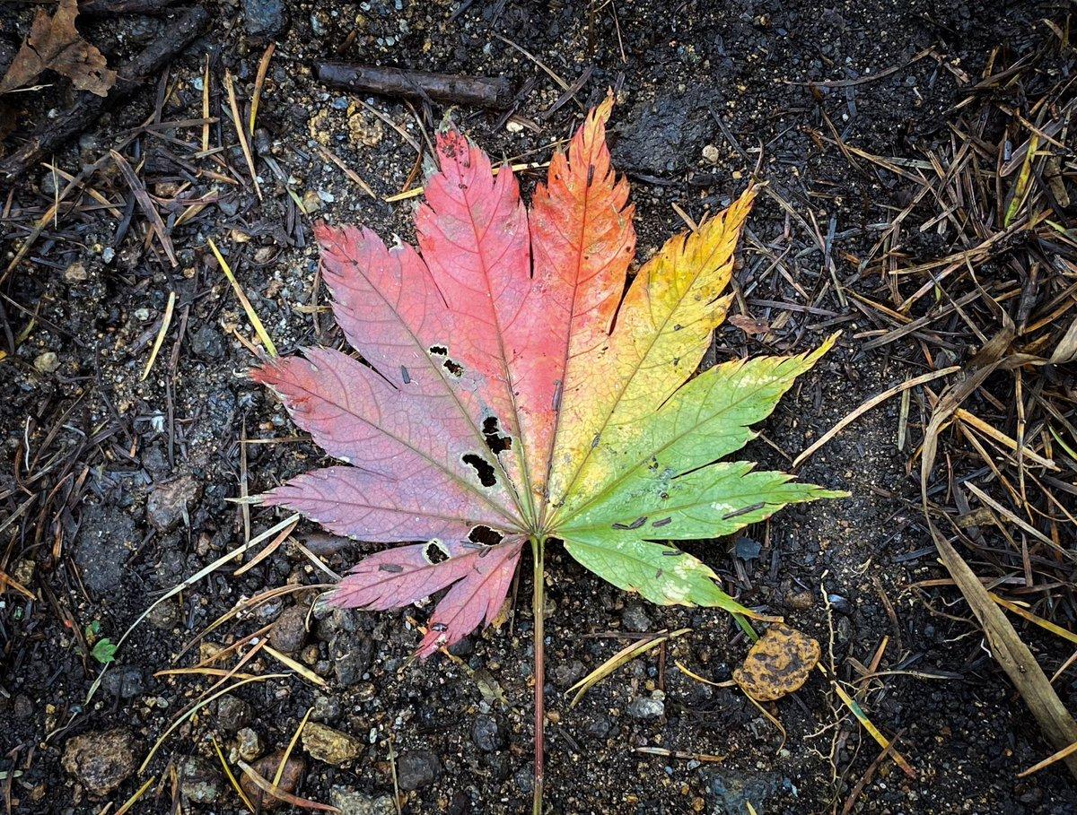 美しい落ち葉があった。一枚に四季が宿っているようだった。