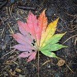 自然が生み出した芸術!四季を詰め込んだような落ち葉がすごく綺麗!