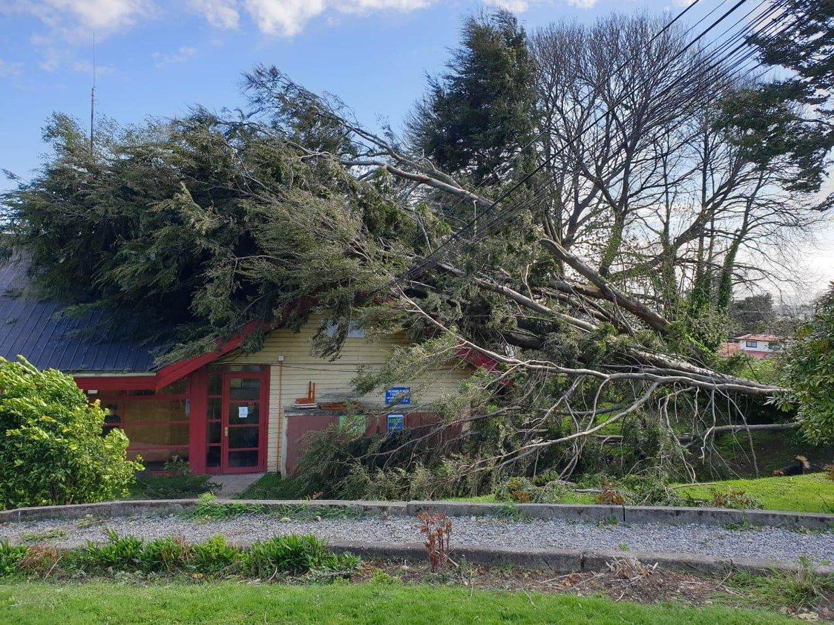 RT @rioenlinea Tras intenso viento cayó un árbol sobre municipio de Lago Ranco https://t.co/35sTlqH43a #ValdiviaCl