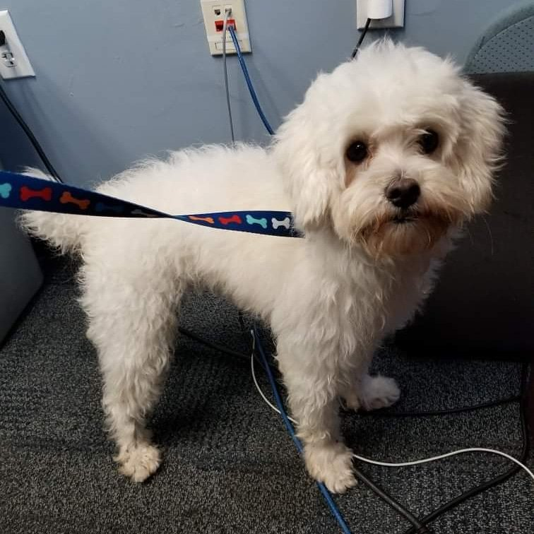 This guy was just #found  in #PasadenaLakes  near NW 85 Way, between Taft St & Pasadena Blvd, #PembrokePines .  Does he look familiar? No collar, chip but looks like a recent haircut & hes friendly. Please help us get him home quickly. Pls RT (case 19-061315) #lost   #poochesinpines