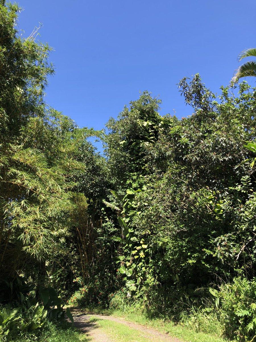 test Twitter Media - Beautiful blue skies in Haiku. #cmweather #Maui #Mauinokaoi https://t.co/Y89kzE5O6I