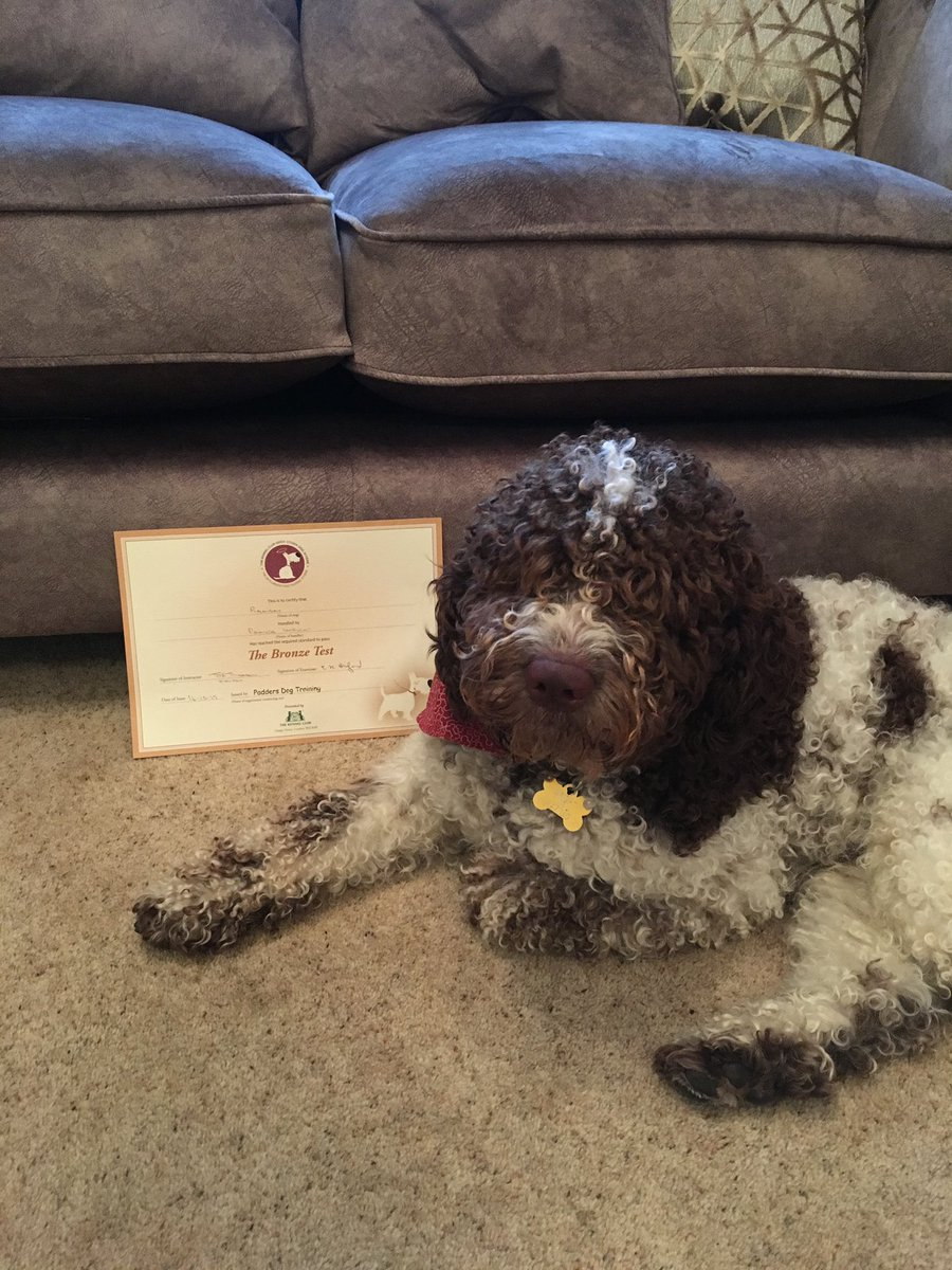 Couldn't be anymore prouder of my wee man  he has passed his kennel club good citizen dog scheme bronze award! Lots of cuddles and kisses when I'm back on Thursday! #DogsofTwittter <br>http://pic.twitter.com/mxUivYYZq0
