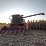 Image for the Tweet beginning: Schweizer Family harvesting corn -