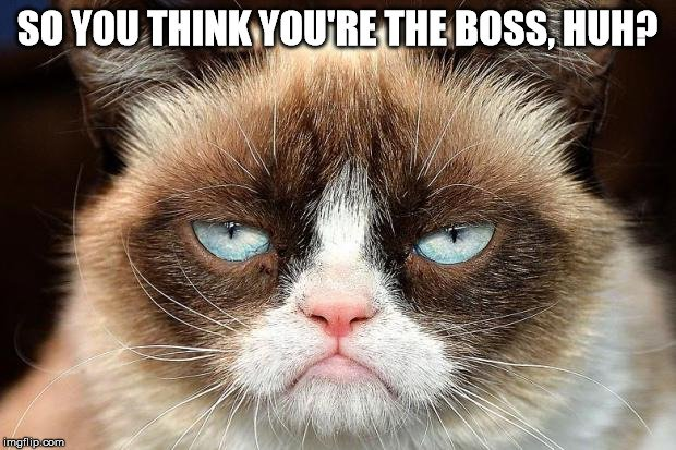Kassandra Lamb On Twitter We Think First Of Halloween But Do You Know All The Octoberholidays Leading Up To It Like Global Cat Day And National Boss S Day Come Check Out Our