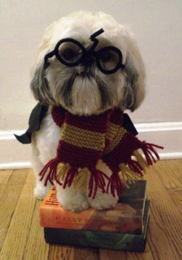 Harry Potter Dog Halloween Costumes.Bp Animal Hospital On Twitter Need A Little Inspiration For Your Pet S Costume Look No Further Https T Co Zftnxjar4q Bocaparkah Halloween Costumes Dressup Harrypotter Inspired Https T Co Fh8b92mfli
