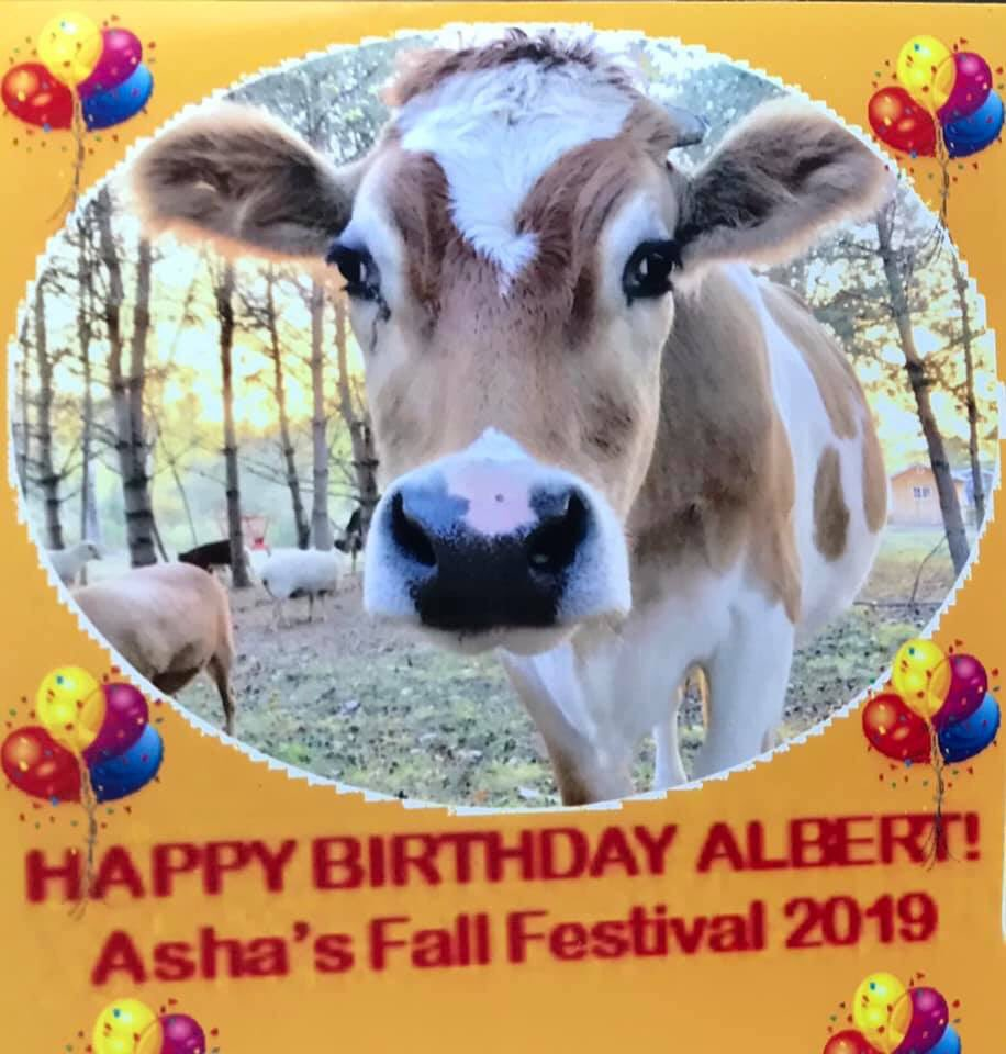 I couldn't fit in the photo booth so Mom asked the nice man taking the pics to go see me. #ashasanctuary #photobooth #ashasanctuaryfallfestival #fallfestival #fall #festival #fun #party #birthday #albertthesupercow #happy #safe #loved #animallover #bekindtoallkindspic.twitter.com/yM3ZmHbuEQ