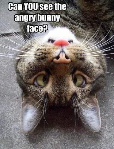 #CatsOfTwitter #catsofinstagram  #pictureoftheday