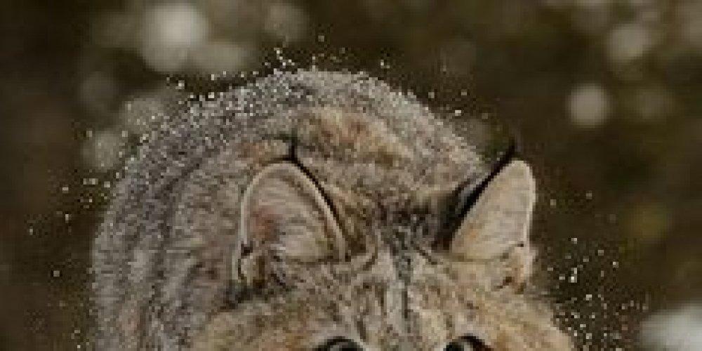 #catsofinstagram #catloversclub #catsoftwitter #cats