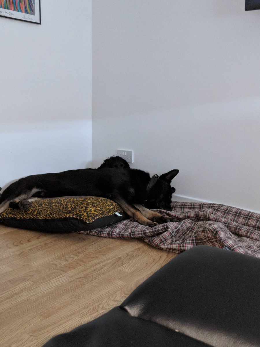 #PDBodie is zonked after a busy nightshift covering the West and Central Scotland. He even managed to capture a housebreaker in Glasgow whilst the local officers caught the 2nd culprit #TeamworkMakesTheDreamWork  #WeHateHousebreakers <br>http://pic.twitter.com/D6xmQZhthL