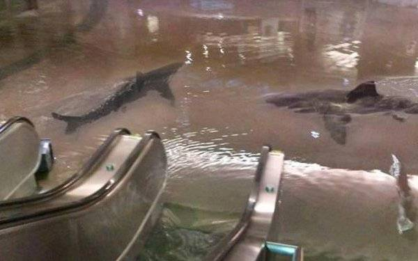 One of these viral #greatwhiteshark photos is real - do you know the story behind it? aquarium.co.za/blog/entry/10-… 🦈📸 #shark #sharknight #interesting