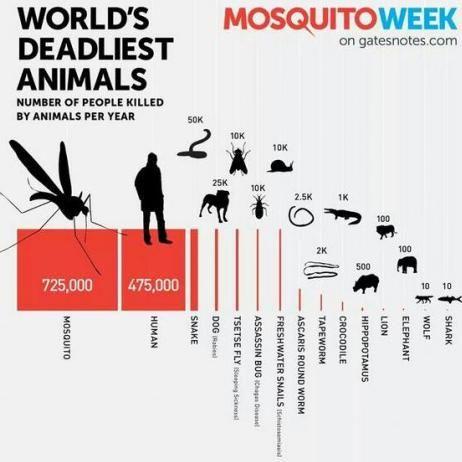 人間の命を奪っている生物トップ10 [単位:万人]❿ワニ 0.1❾サナダムシ 0.2❽回虫 0.25❼淡水の巻貝(住血吸虫症) 1❻吸血昆虫[サシガメ](シャーガス病) 1❺ツェツェバエ(睡眠病) 1❹犬(狂犬病) 2.5❸蛇 5❷人間 47.5❶蚊 72.5海外渡航時の予防接種は大切ですね…